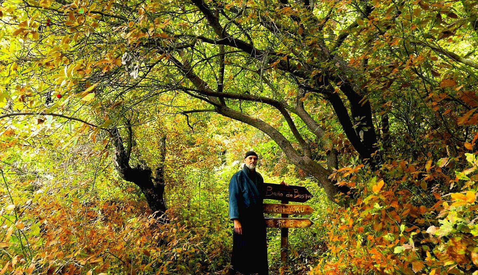 Blog Shinrin Yoku Baño de Bosque