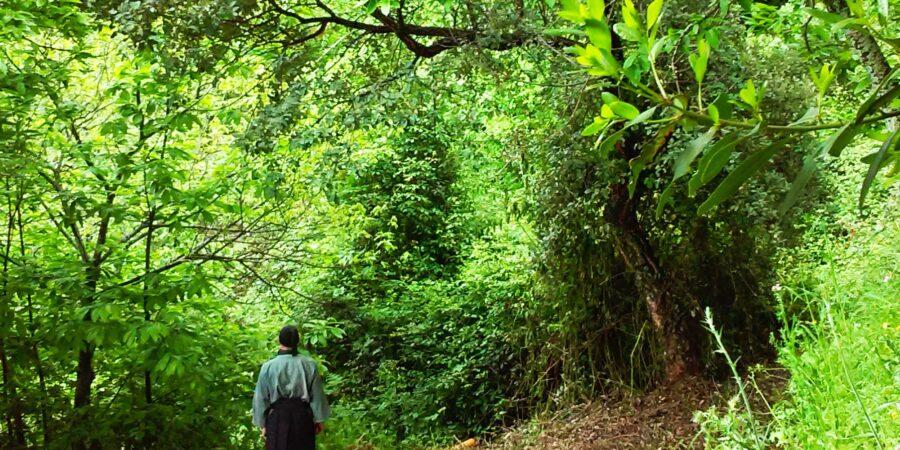 Baño de Bosque , es una actividad consistente en realizar una visita a un bosque sumergiéndose en él con los cinco sentidos.Pionero shinrin yoku baños de bosque , 森林浴,forestherapy,forestbathing,naturetherapy,banydebosc,terapiadebosque,Bain de forêt, лесная баня,Bagno nella foresta ,Banho na floresta,Waldbad ,Skogsbad,Metsäkylpy,삼림욕 ,phytoncide