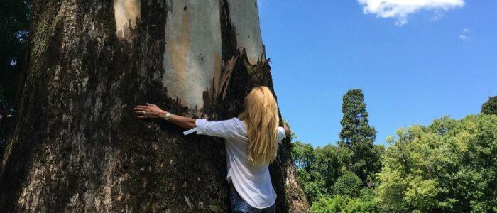 Maite Delgado-shinrinyoku-bañodebosque-forestbathing
